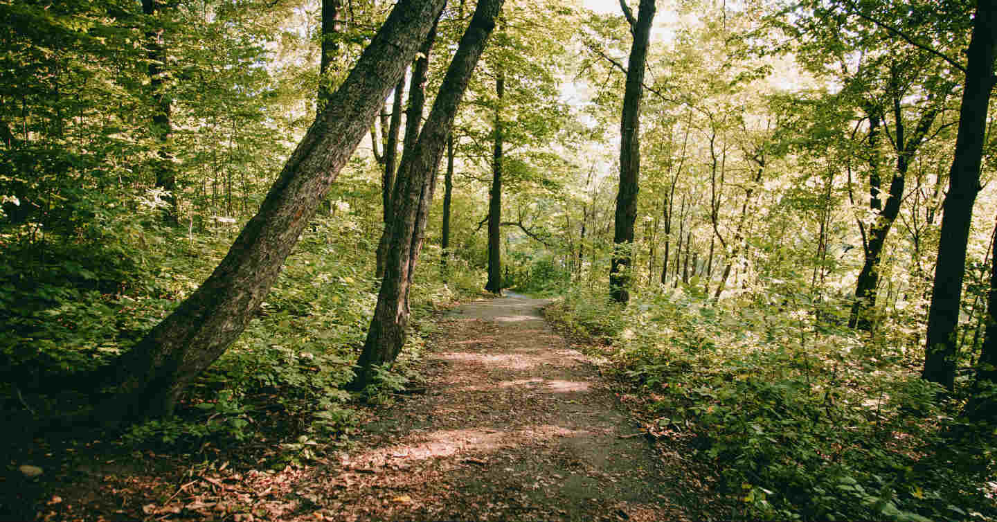 wooded trail in green bay area wisconsin