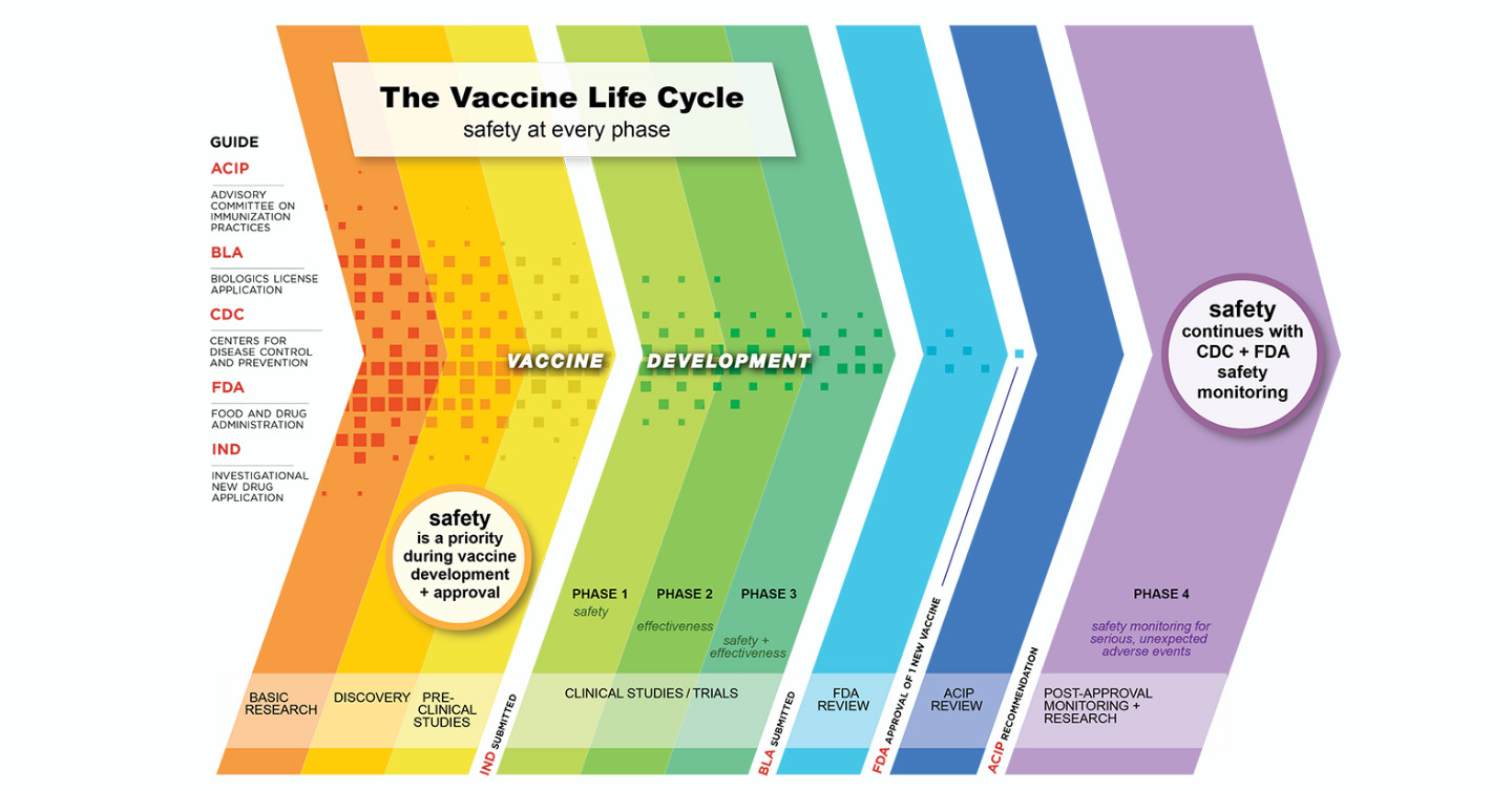 life cycle of vaccine graph